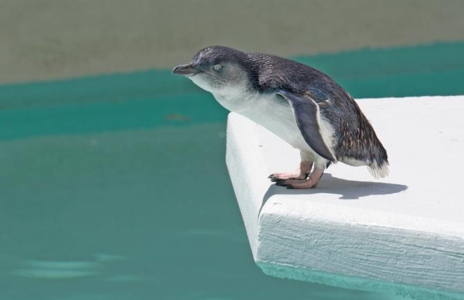 Sleeping With The Fairy Penguins – Bicheno Tasmania