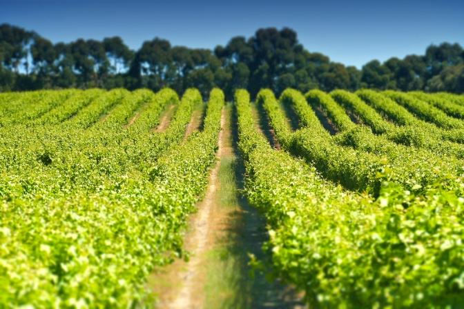 Apertivo with Tamburlaine Organic Wines