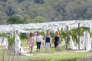 az20180215 COOLANGATTA WINES AND BIGFOOT ADVENTURE TOURS Shoalhaven's Coolangatta Wine Estate vineyards and grape picking along with Bigfoot mountain tours. L-R Anna Jurgen,Ramona Klenk, Lisa Marie Wirth and Mona Ehmer (German interns) walk through the vineyard during picking season. Thursday 15 February 2018 Pic by Andy Zakeli
