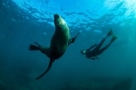 Swimming_With_Seals