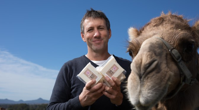 World's first camel cheddar and camel whey vodka to be unveiled